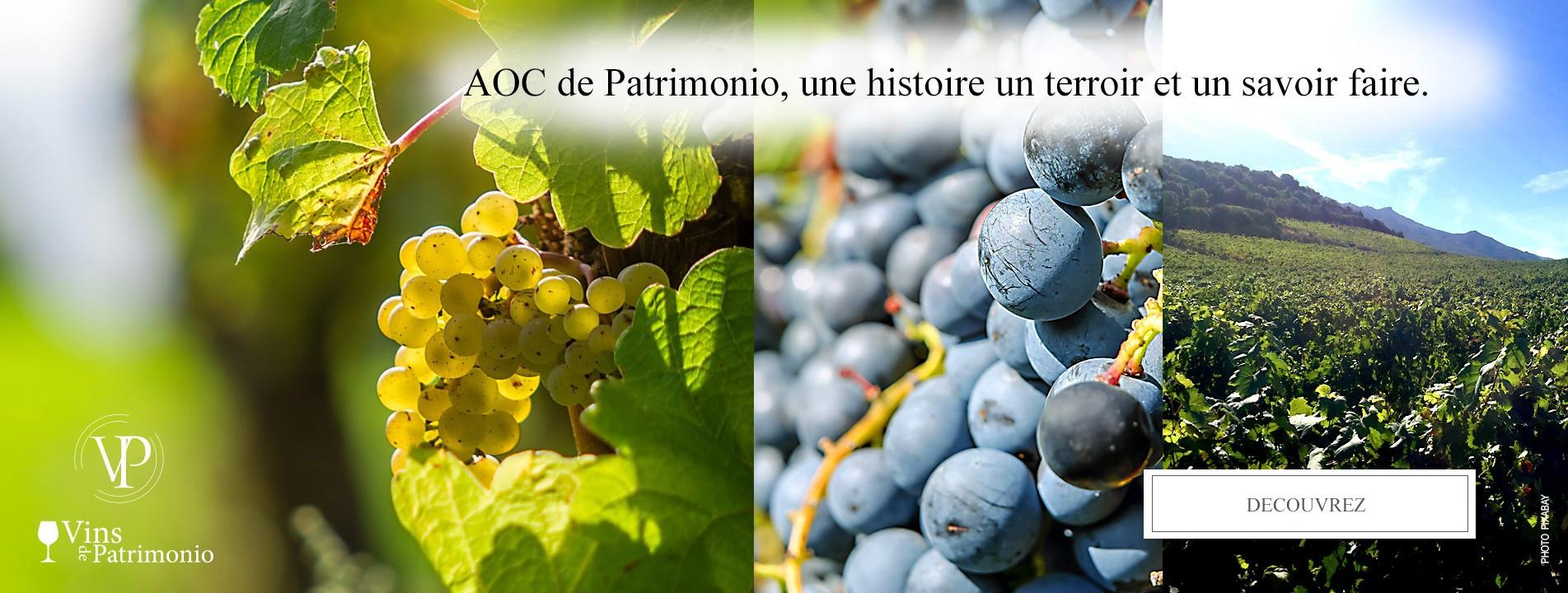 Vin-patrimonio-terroir
